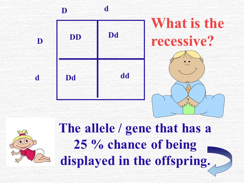 What is the dominant? The allele / gene that has a 75% chance of being displayed in the offspring. DD Dd dd d D D d
