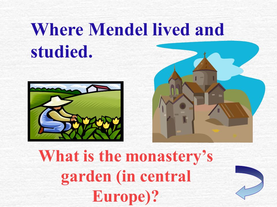 Mendels occupation. What is a priest or monk?