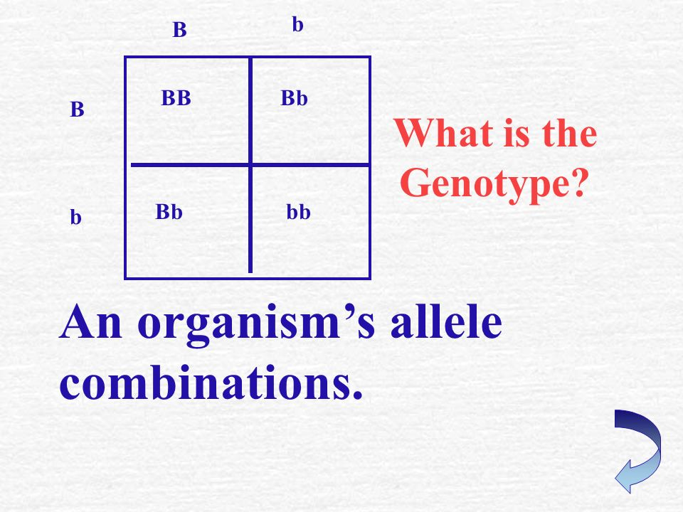 What is a Punnett Square? It is used to predict the possible combination of alleles.