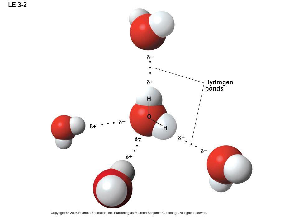 LE 3-2 Hydrogen bonds