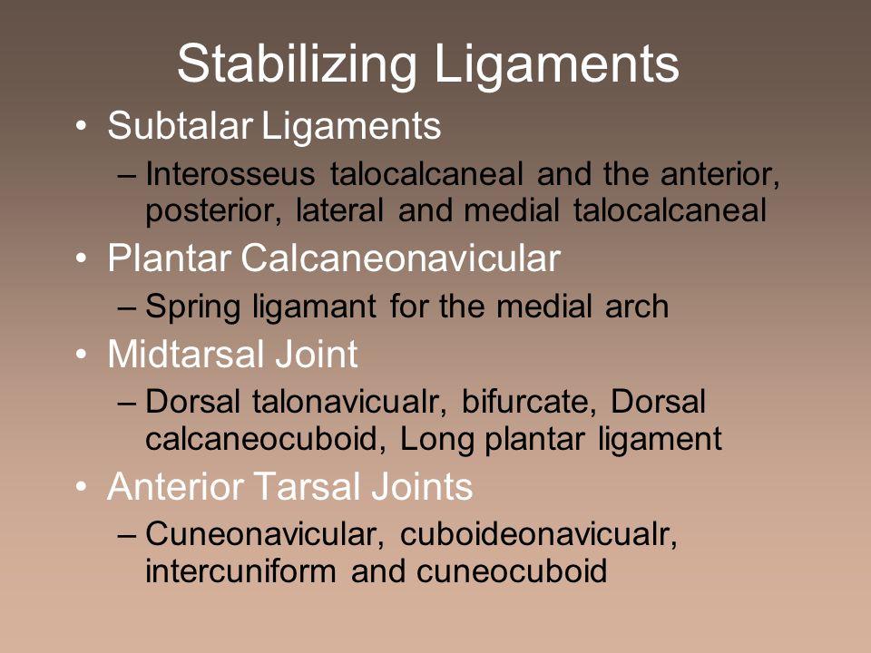 Stabilizing Ligaments Subtalar Ligaments –Interosseus talocalcaneal and the anterior, posterior, lateral and medial talocalcaneal Plantar Calcaneonavi