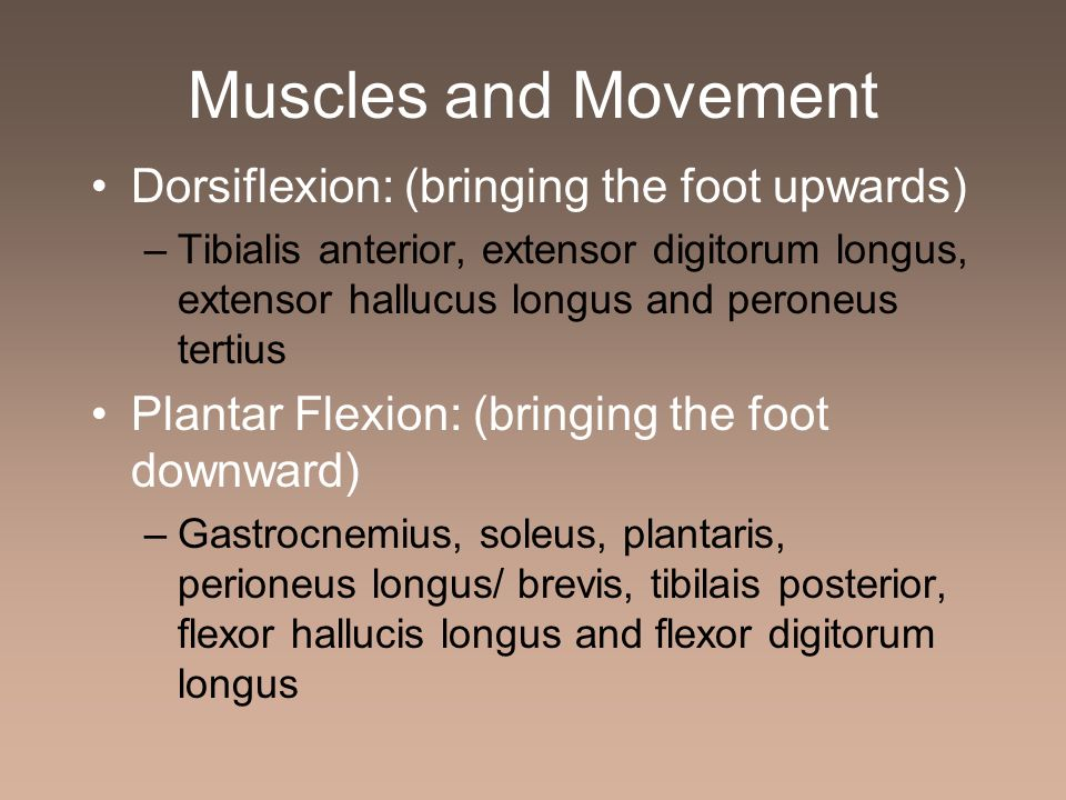 Muscles and Movement Dorsiflexion: (bringing the foot upwards) –Tibialis anterior, extensor digitorum longus, extensor hallucus longus and peroneus te