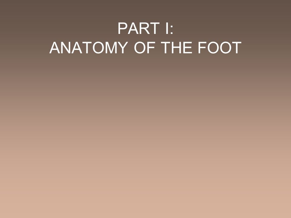 PART I: ANATOMY OF THE FOOT