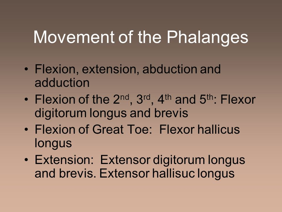 Movement of the Phalanges Flexion, extension, abduction and adduction Flexion of the 2 nd, 3 rd, 4 th and 5 th : Flexor digitorum longus and brevis Fl