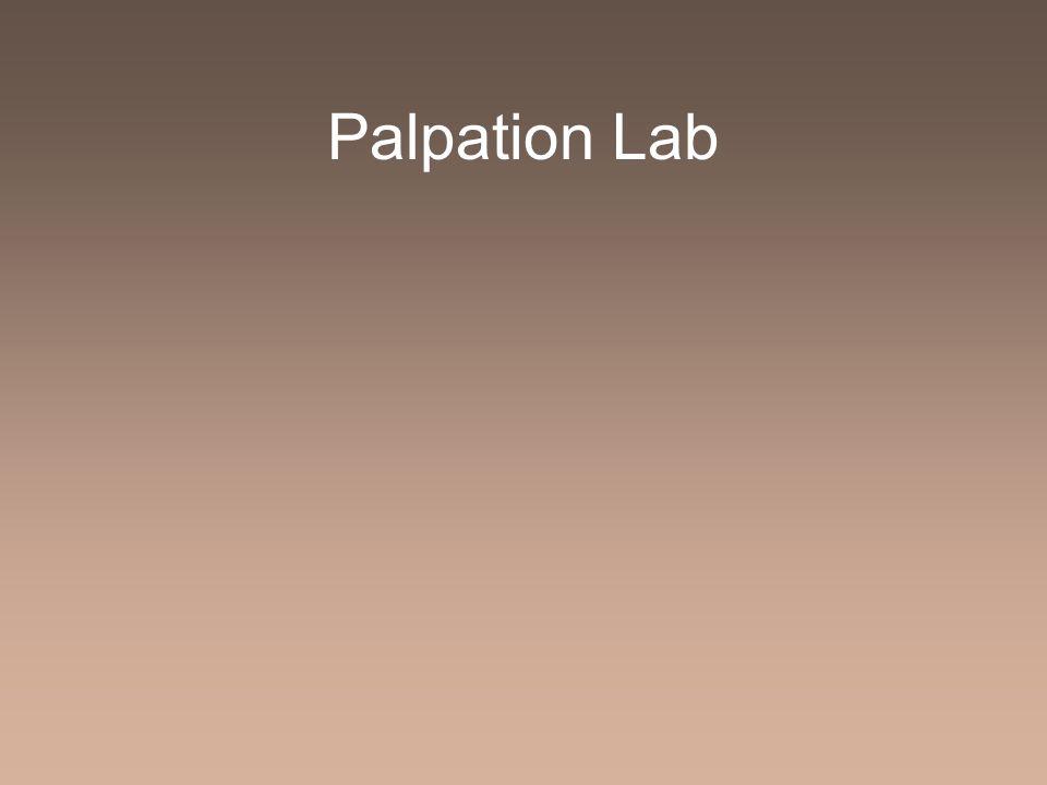 Palpation Lab
