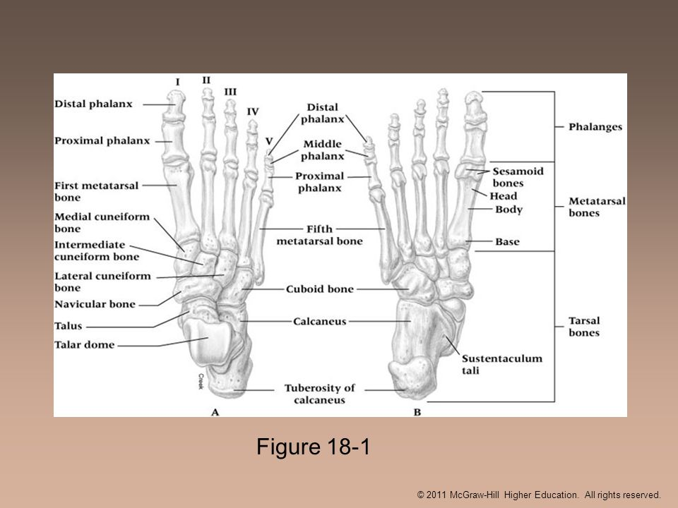 Figure 18-1 © 2011 McGraw-Hill Higher Education. All rights reserved.