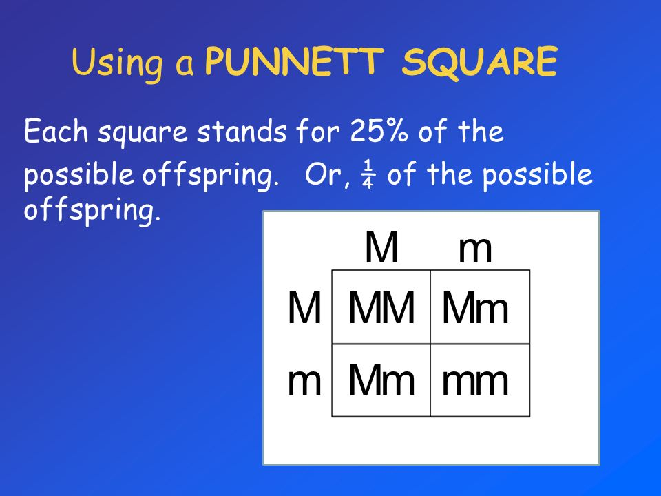 Using a PUNNETT SQUARE Each square stands for 25% of the possible offspring. Or, ¼ of the possible offspring. Mm M m MMMm M mmm