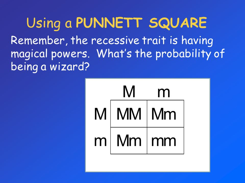 Using a PUNNETT SQUARE Remember, the recessive trait is having magical powers. Whats the probability of being a wizard? Mm M m MMMm M mmm
