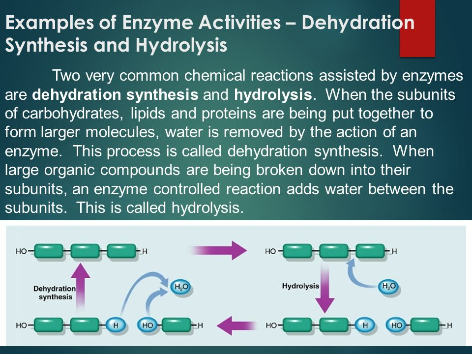 Examples of Enzyme Activities – Dehydration Synthesis and Hydrolysis Two very common chemical reactions assisted by enzymes are dehydration synthesis