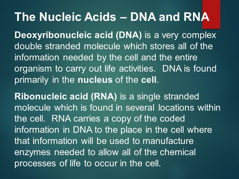The Nucleic Acids – DNA and RNA Deoxyribonucleic acid (DNA) is a very complex double stranded molecule which stores all of the information needed by t