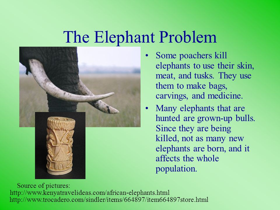 The Elephant Problem Some poachers kill elephants to use their skin, meat, and tusks. They use them to make bags, carvings, and medicine. Many elephan