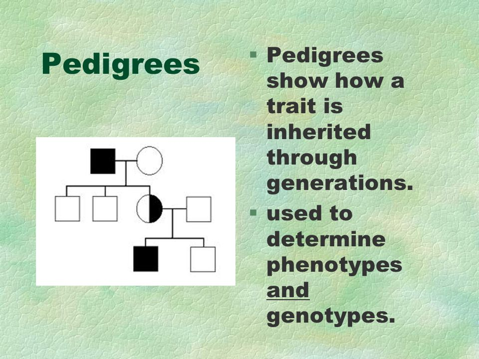 Pedigrees §Pedigrees show how a trait is inherited through generations. §used to determine phenotypes and genotypes.