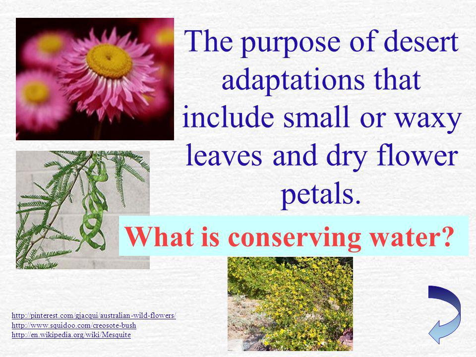 The purpose of desert adaptations that include small or waxy leaves and dry flower petals.