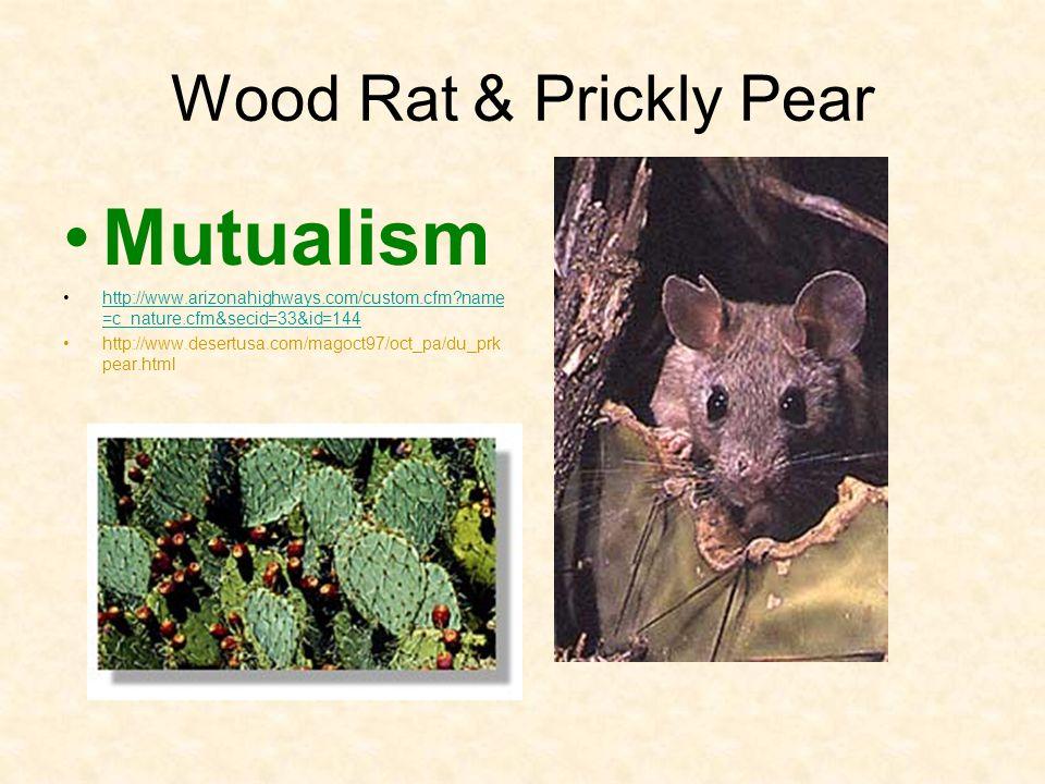 Wood Rat & Prickly Pear Mutualism http://www.arizonahighways.com/custom.cfm?name =c_nature.cfm&secid=33&id=144http://www.arizonahighways.com/custom.cf