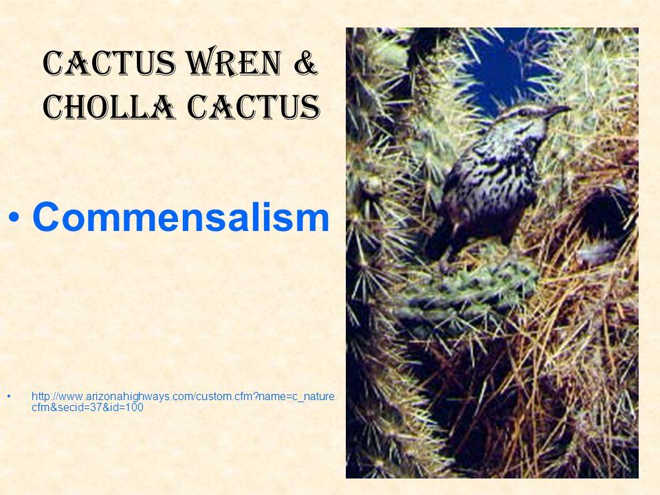 Cactus Wren & Cholla Cactus Commensalism http://www.arizonahighways.com/custom.cfm?name=c_nature. cfm&secid=37&id=100