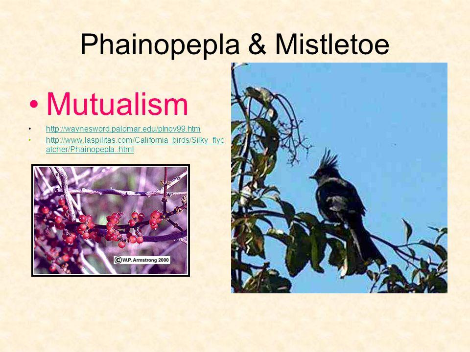 Phainopepla & Mistletoe Mutualism http://waynesword.palomar.edu/plnov99.htm http://www.laspilitas.com/California_birds/Silky_flyc atcher/Phainopepla..