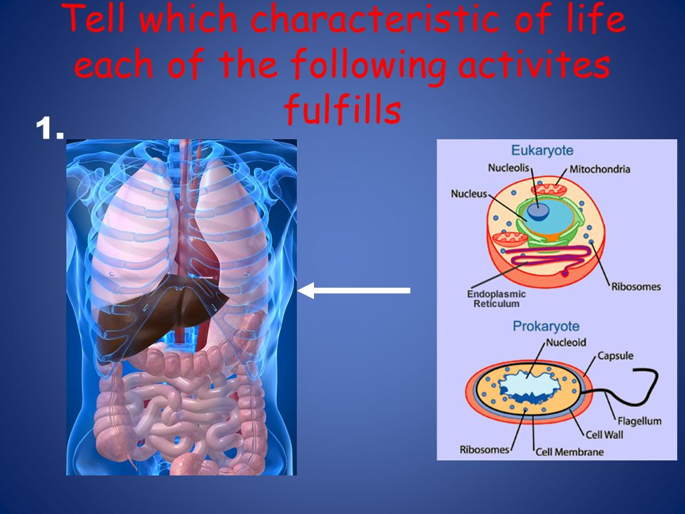 Tell which characteristic of life each of the following activites fulfills 1.
