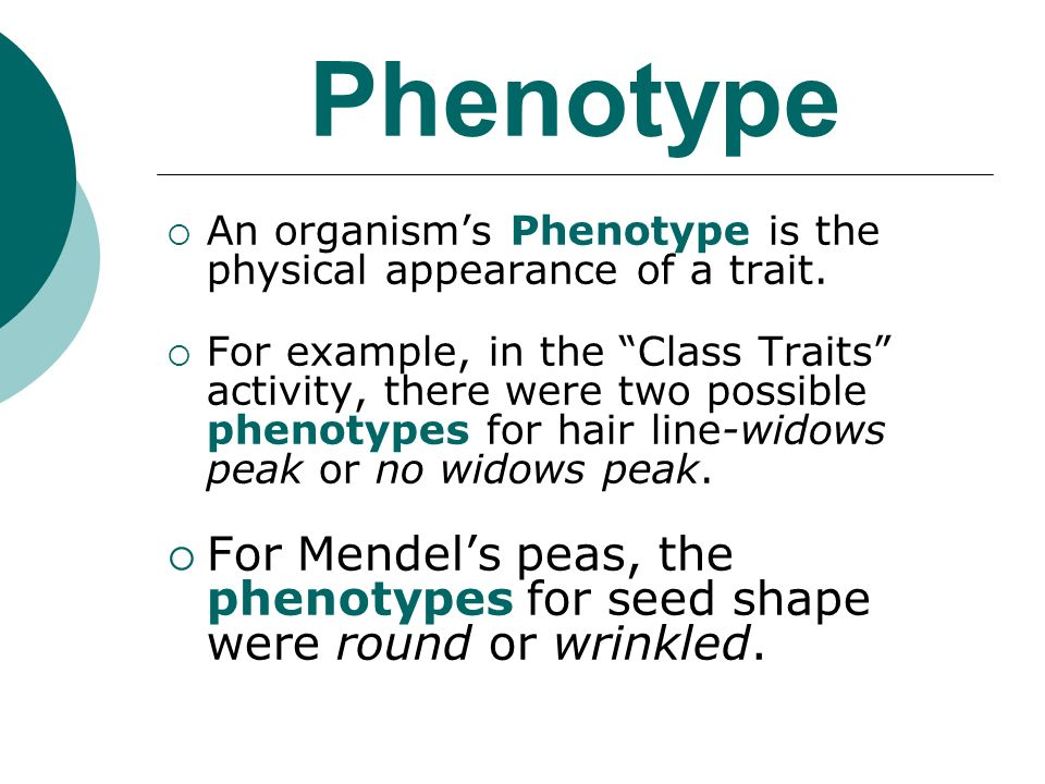 Phenotype An organisms Phenotype is the physical appearance of a trait.