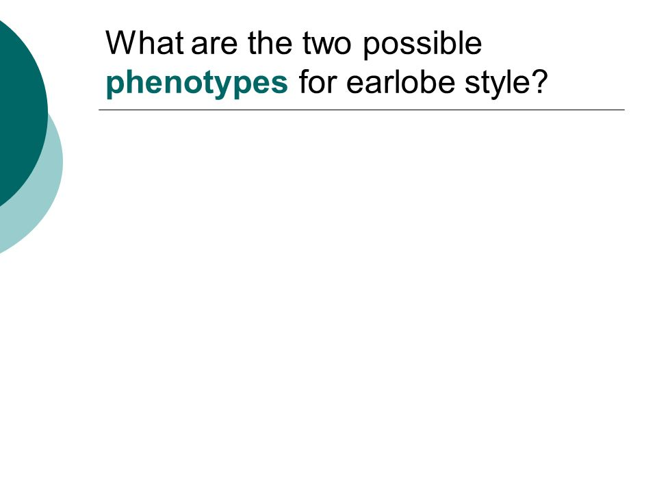 What are the two possible phenotypes for earlobe style