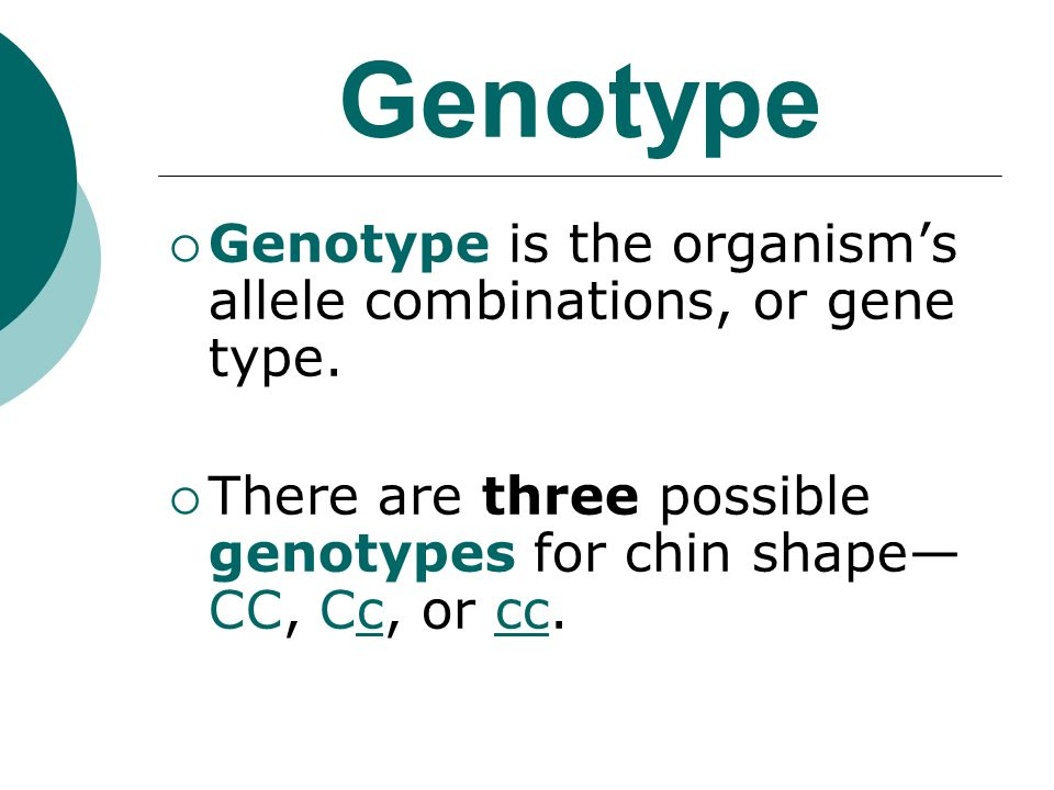 Genotype Genotype is the organisms allele combinations, or gene type.