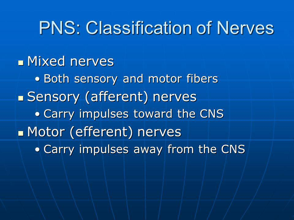 PNS: Classification of Nerves Mixed nerves Mixed nerves Both sensory and motor fibersBoth sensory and motor fibers Sensory (afferent) nerves Sensory (afferent) nerves Carry impulses toward the CNSCarry impulses toward the CNS Motor (efferent) nerves Motor (efferent) nerves Carry impulses away from the CNSCarry impulses away from the CNS