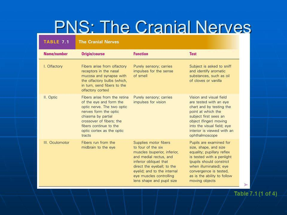 PNS: The Cranial Nerves Table 7.1 (1 of 4)