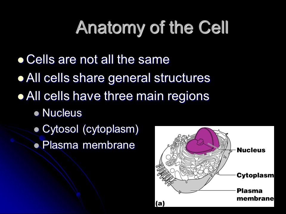Anatomy of the Cell Cells are not all the same Cells are not all the same All cells share general structures All cells share general structures All ce