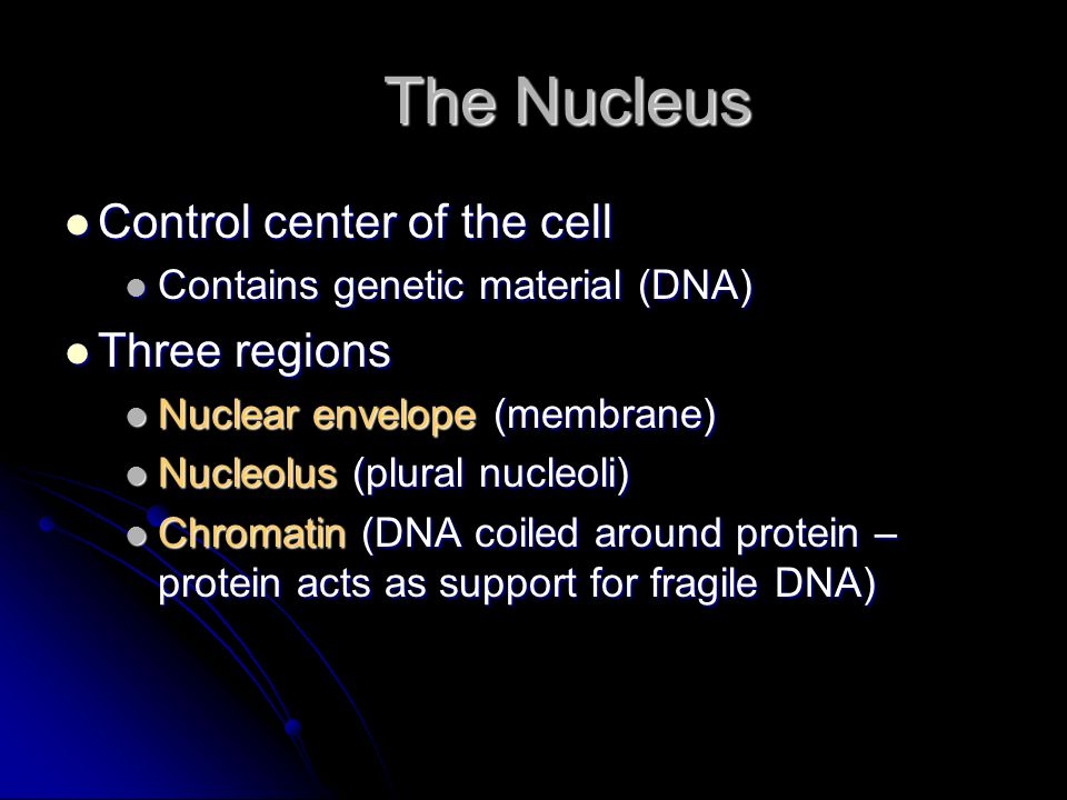 Mitochondria Mitochondria Powerhouses of the cell Powerhouses of the cell Change shape continuously Change shape continuously Carry out reactions where oxygen is used to break down food Carry out reactions where oxygen is used to break down food Provides energy for cell Provides energy for cell