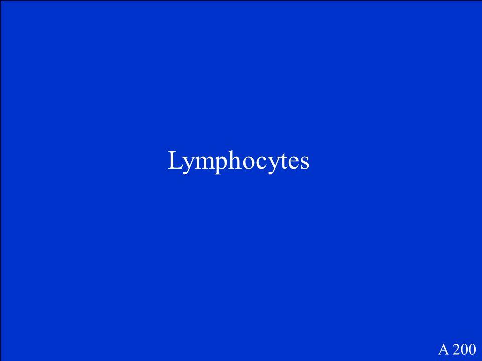 Lymphocytes A 200