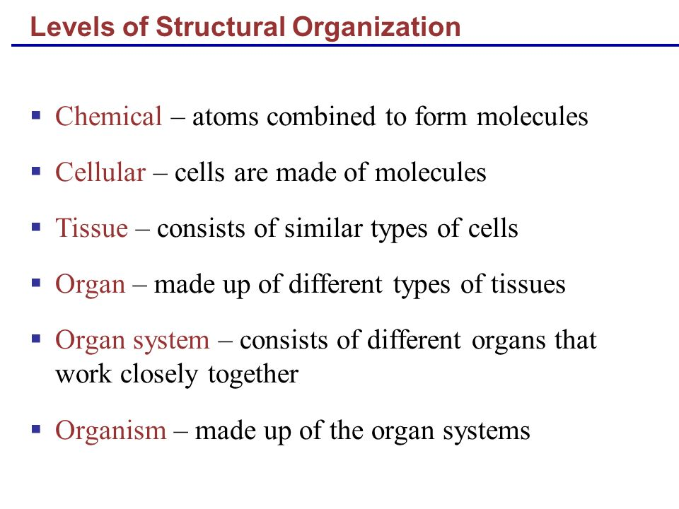 Levels of Structural Organization Chemical – atoms combined to form molecules Cellular – cells are made of molecules Tissue – consists of similar type