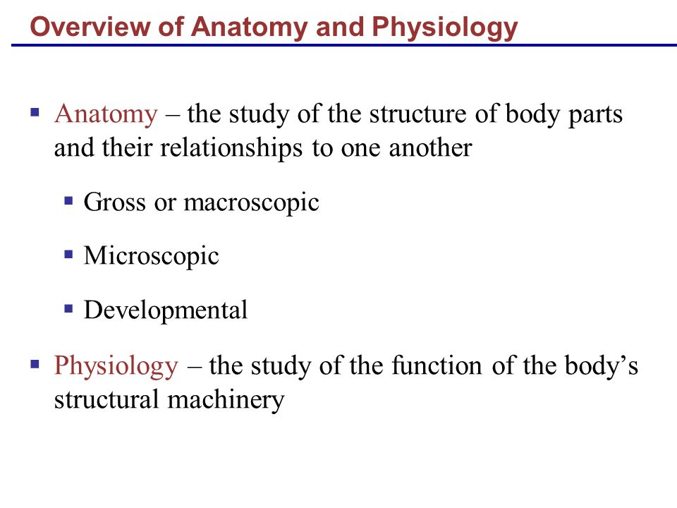 Overview of Anatomy and Physiology Anatomy – the study of the structure of body parts and their relationships to one another Gross or macroscopic Micr