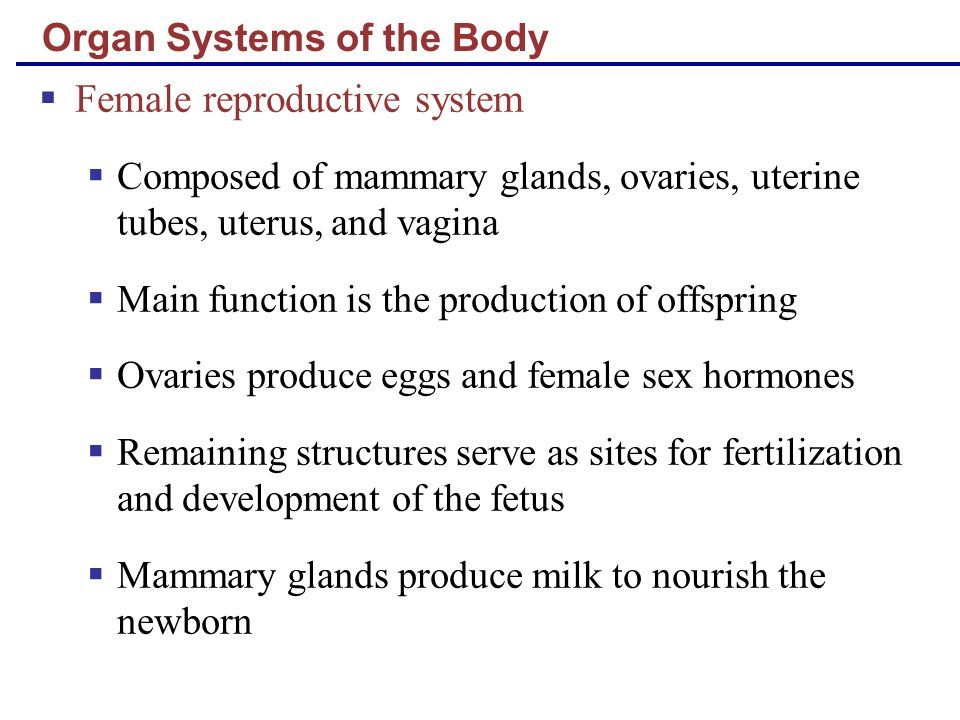 Organ Systems of the Body Female reproductive system Composed of mammary glands, ovaries, uterine tubes, uterus, and vagina Main function is the produ