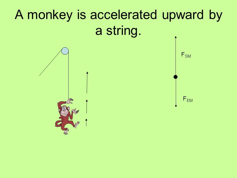 A monkey is accelerated upward by a string. F EM F SM
