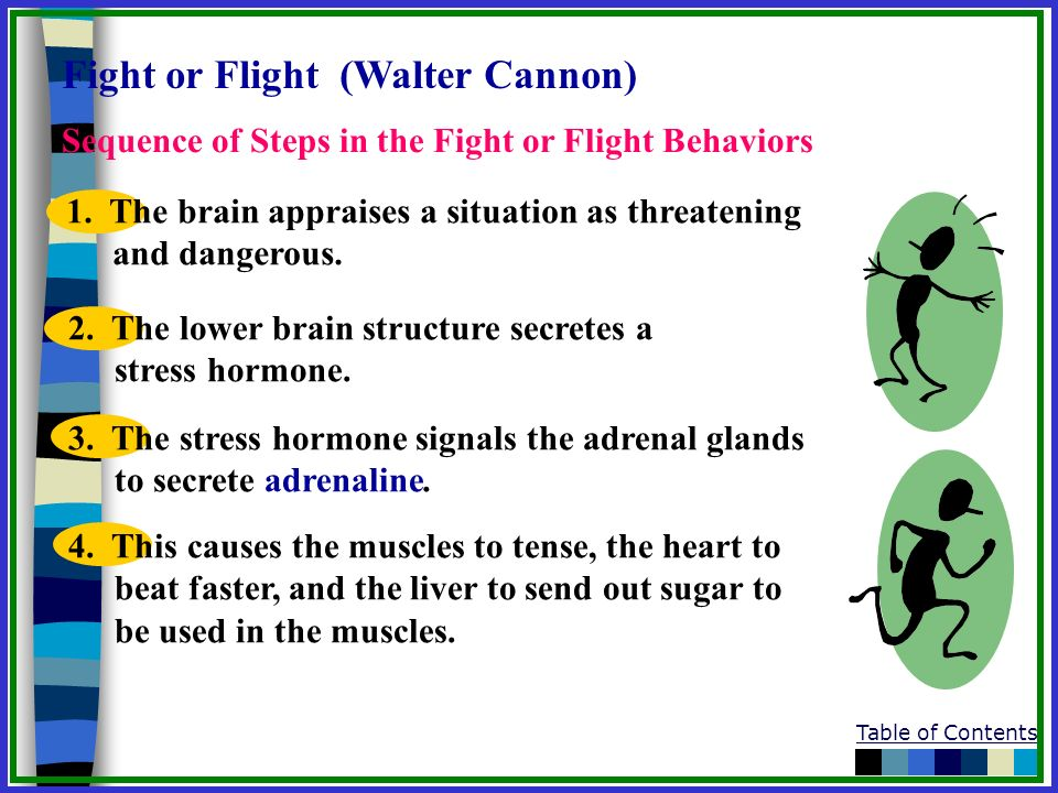 Table of Contents Sequence of Steps in the Fight or Flight Behaviors 1. The brain appraises a situation as threatening and dangerous. 2. The lower bra