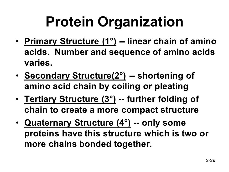 2-29 Protein Organization Primary Structure (1°) -- linear chain of amino acids. Number and sequence of amino acids varies. Secondary Structure(2°) --
