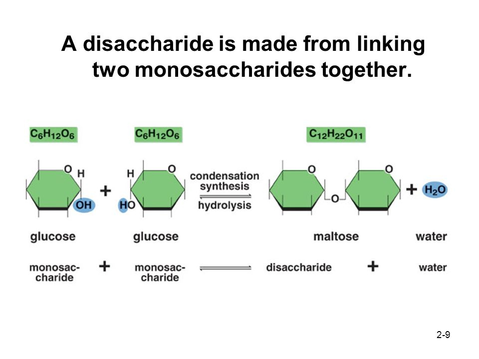 2-9 A disaccharide is made from linking two monosaccharides together.