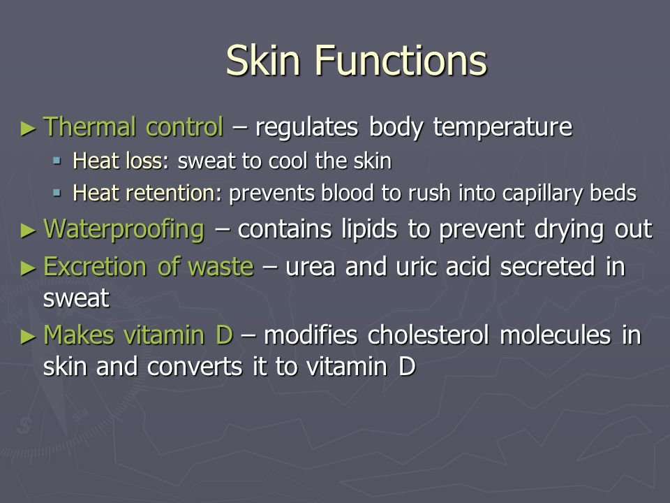 Skin Functions Thermal control – regulates body temperature Thermal control – regulates body temperature Heat loss: sweat to cool the skin Heat loss:
