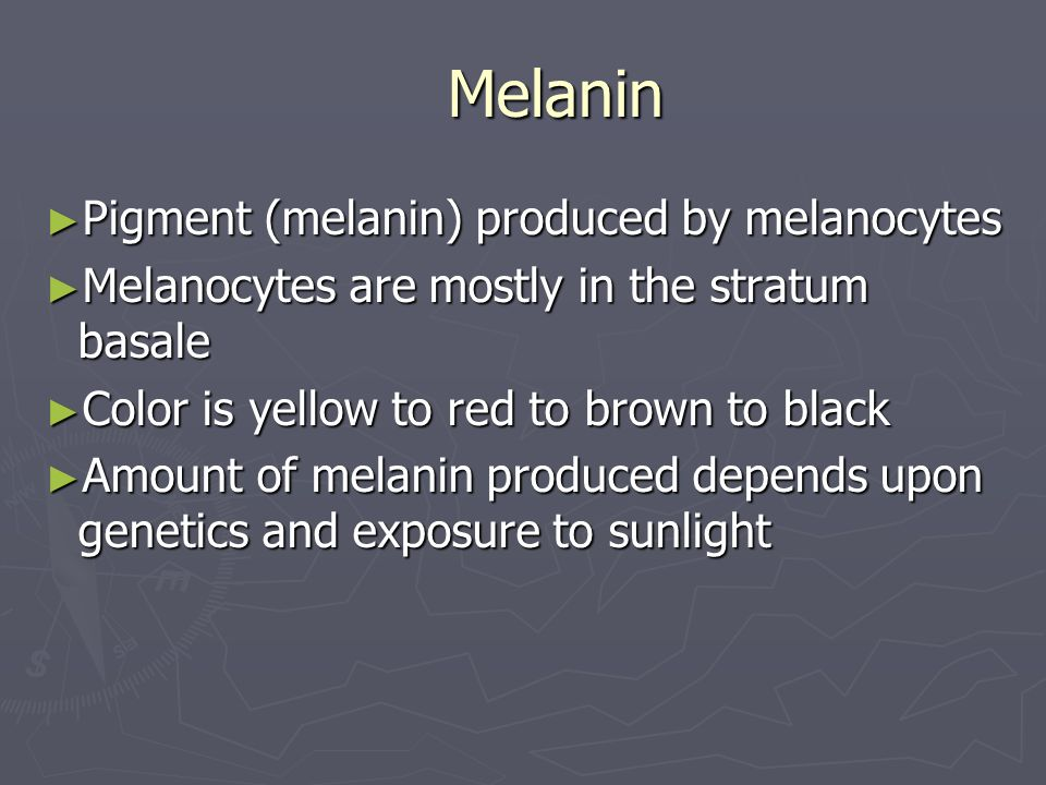 Melanin Pigment (melanin) produced by melanocytes Pigment (melanin) produced by melanocytes Melanocytes are mostly in the stratum basale Melanocytes a