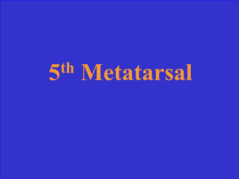 5 th Metatarsal