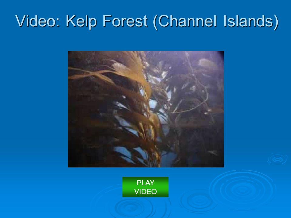 Video: Kelp Forest (Channel Islands) PLAY VIDEO