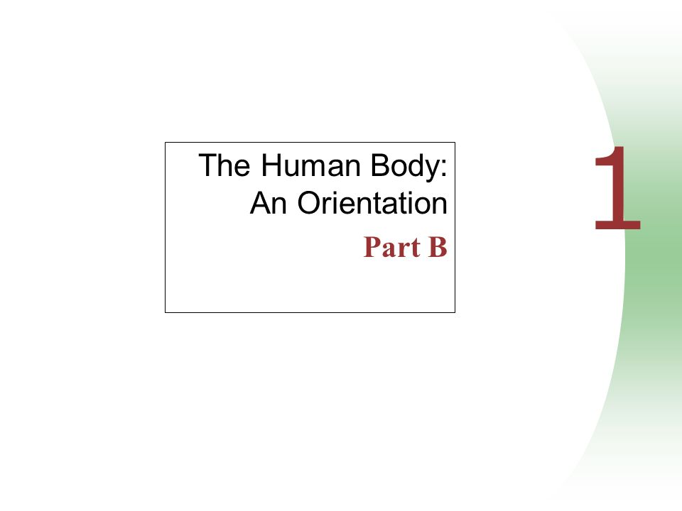 1 The Human Body: An Orientation Part B