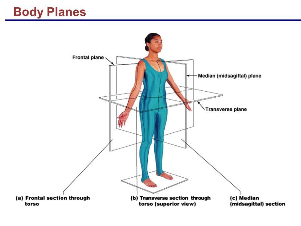 Body Planes
