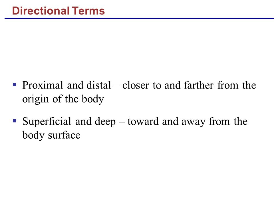 Directional Terms Proximal and distal – closer to and farther from the origin of the body Superficial and deep – toward and away from the body surface