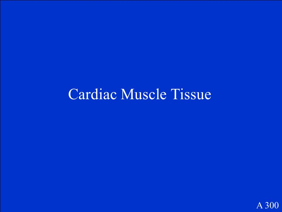 Identify this muscle tissue A 300