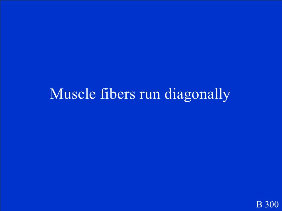 What does the term oblique refer to when naming muscles? B 300