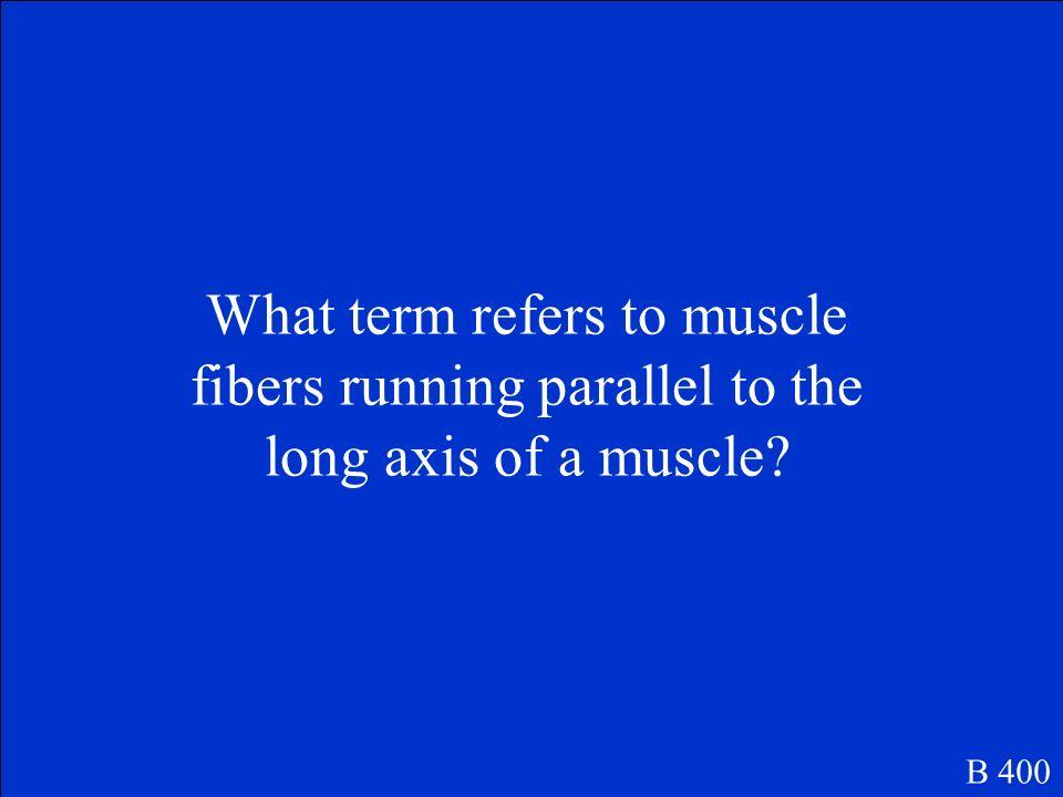 Muscle fibers run diagonally B 300