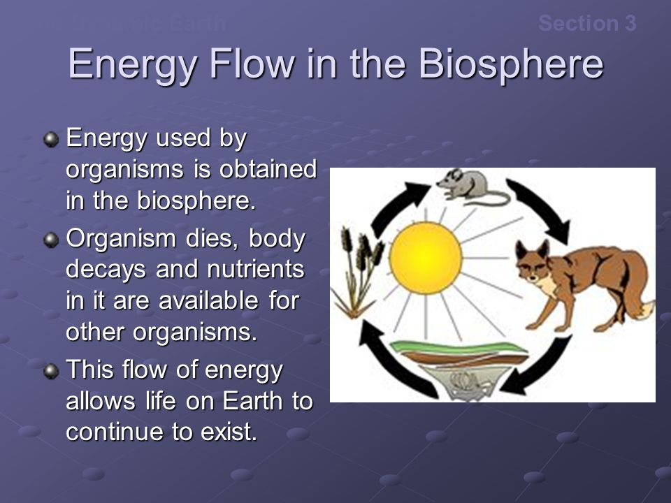 The Dynamic EarthSection 3 Energy Flow in the Biosphere Energy used by organisms is obtained in the biosphere. Organism dies, body decays and nutrient