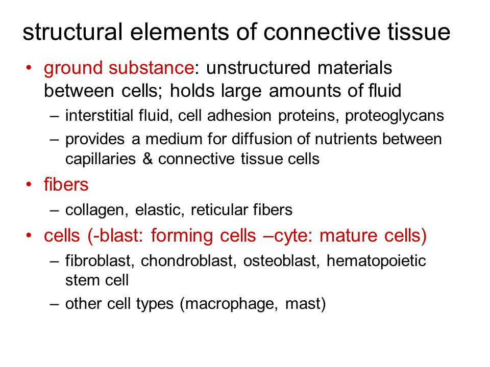 structural elements of connective tissue ground substance: unstructured materials between cells; holds large amounts of fluid –interstitial fluid, cel