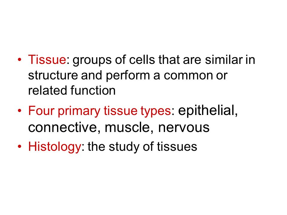 Tissue: groups of cells that are similar in structure and perform a common or related function Four primary tissue types: epithelial, connective, musc