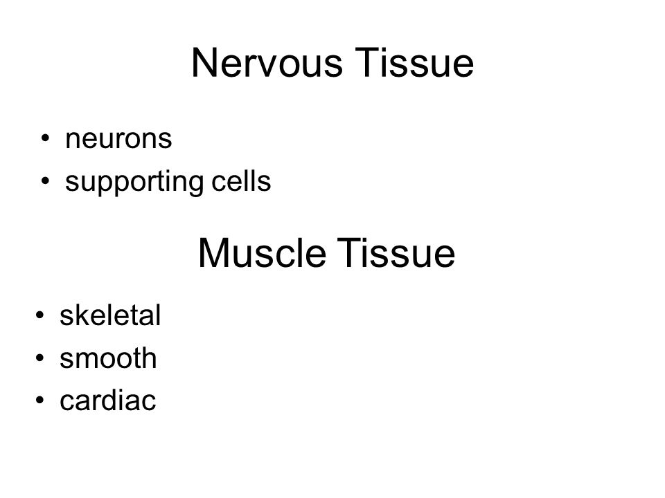 Nervous Tissue neurons supporting cells Muscle Tissue skeletal smooth cardiac